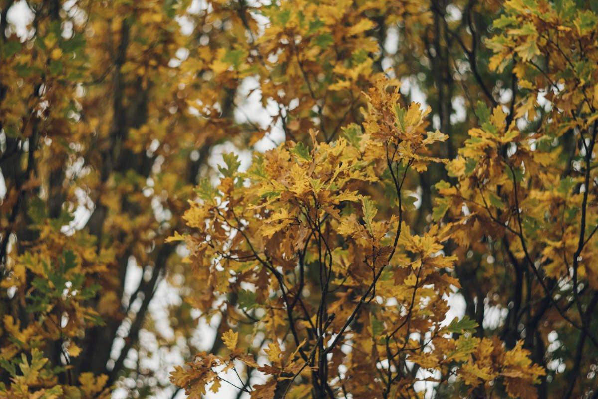 jesienna sesja narzeczonych konstancin jeziorna 6