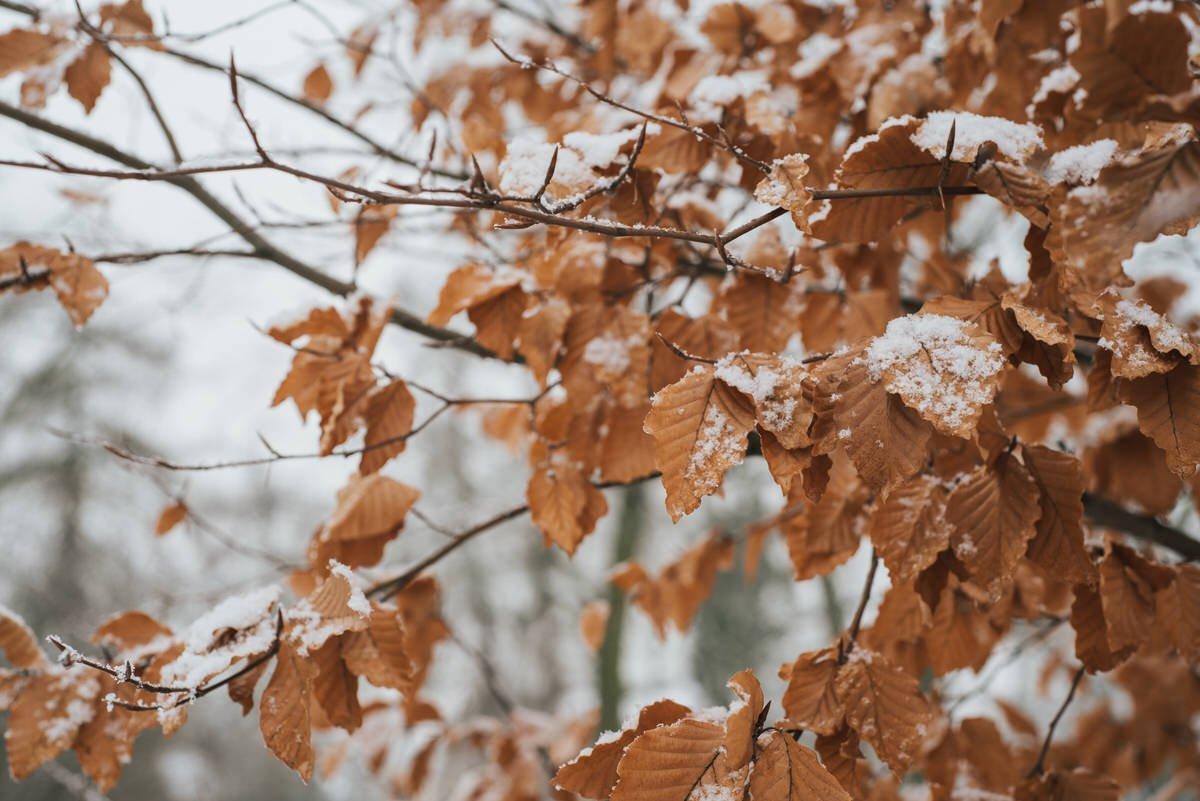 zimowa sesja narzeczenska 58