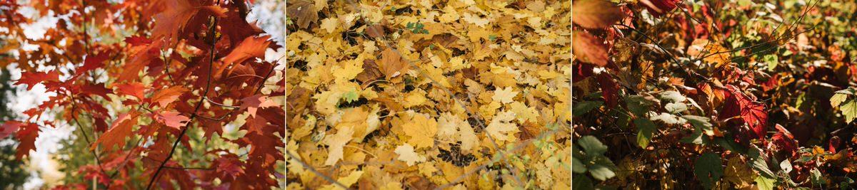 jesienna sesja przedslubna okolice warszawy 1