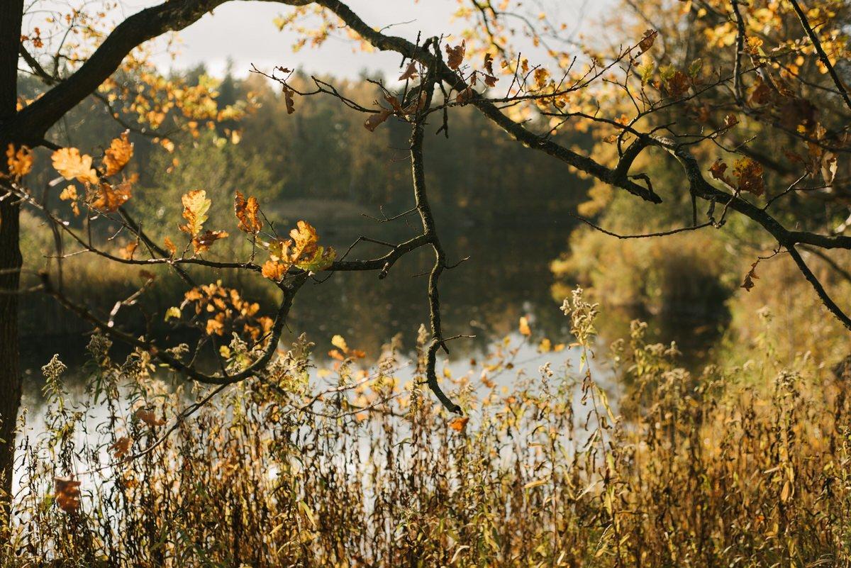 jesienna sesja przedslubna okolice warszawy 9